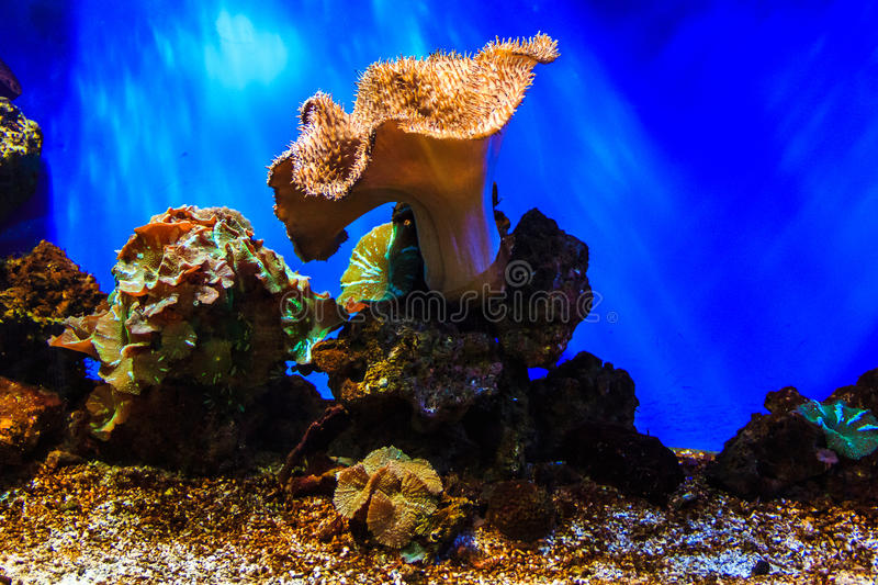 A vivid and lush coral reef in ocean, marine sea life, aquatic plants flora. stock photos