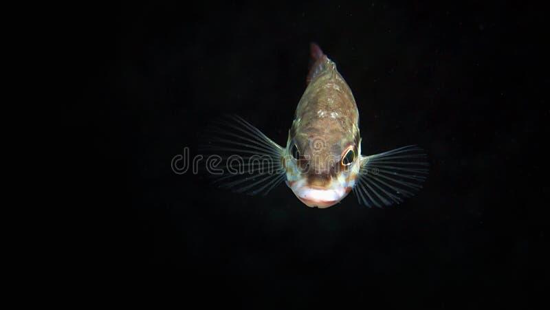Underwaterphotography стоковые изображения