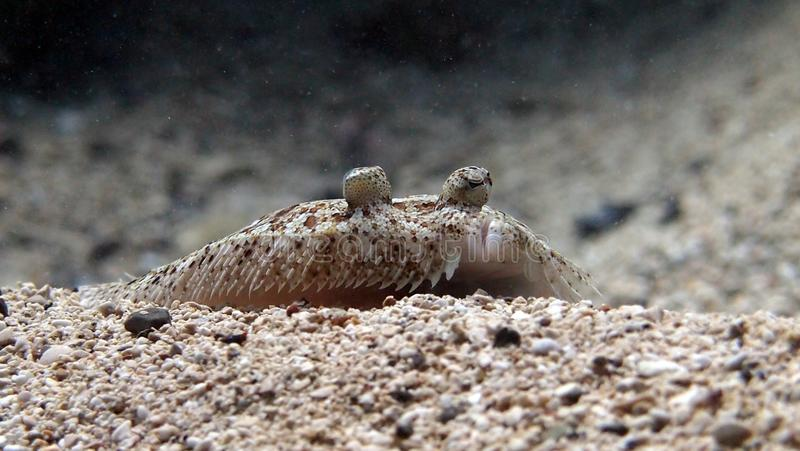 Underwaterphotography стоковое изображение rf