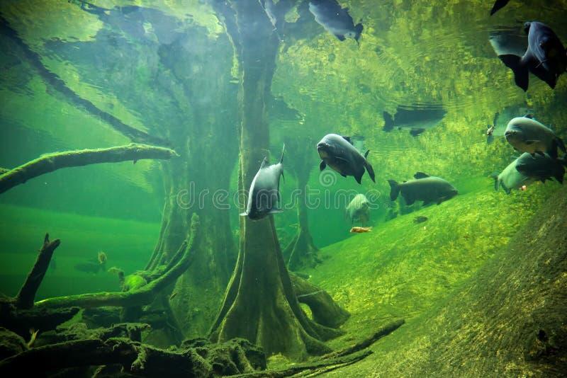 underworld стоковое фото rf
