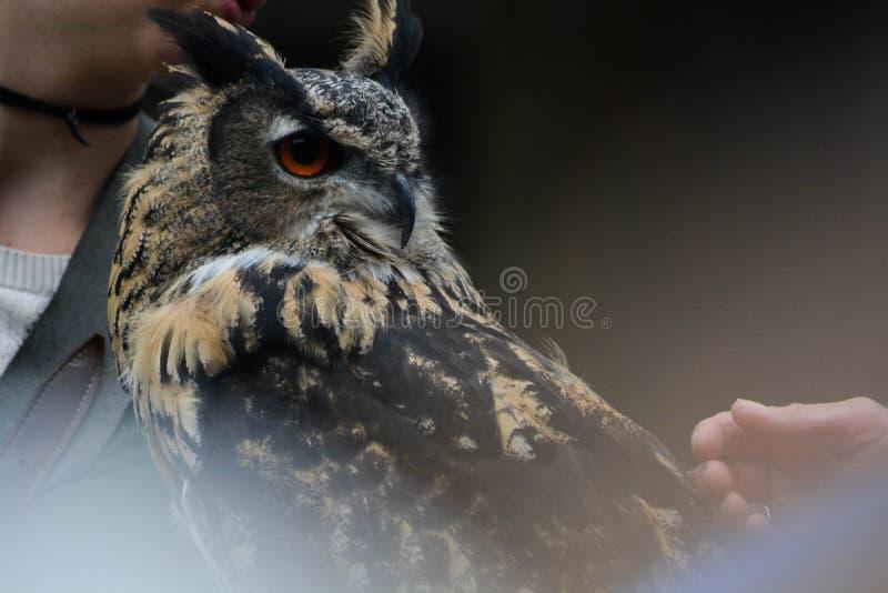 Undeutlicher Eagle Owl stockfotografie