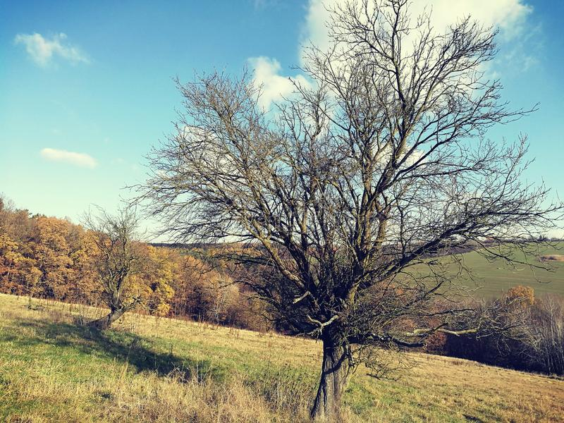 A undressed tree. Resting for a new season stock images
