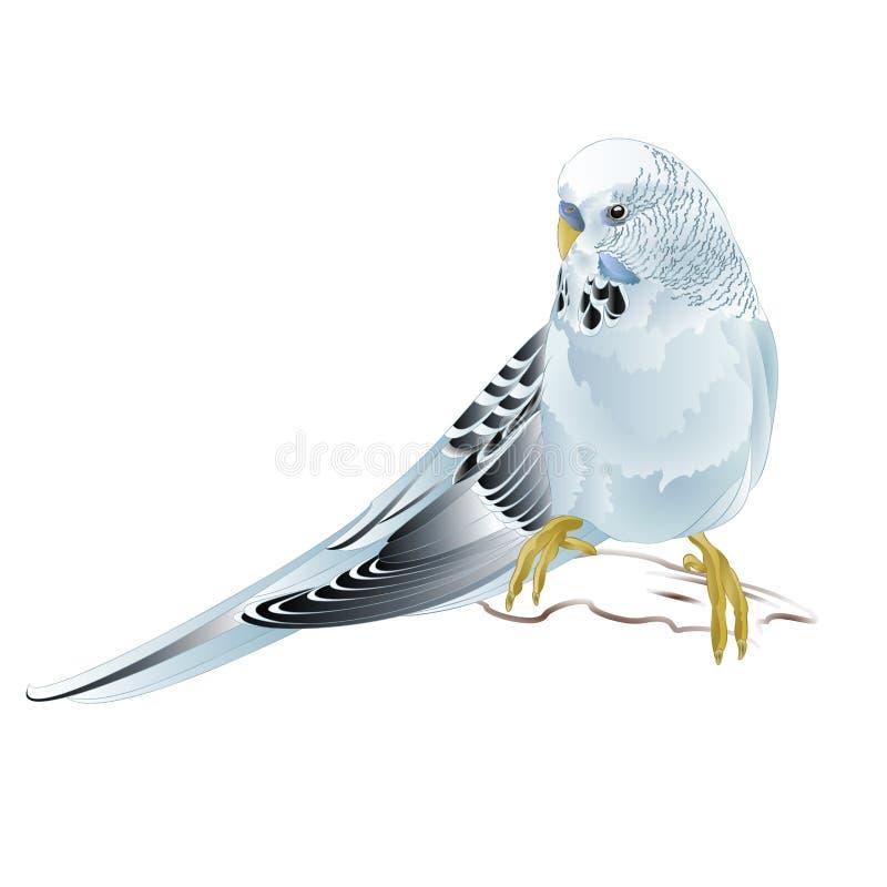 Undulat, älsklings- parakiter för blått eller budgie eller husdjur för hem för skalparakiter på en redigerbar vit illustration fö stock illustrationer
