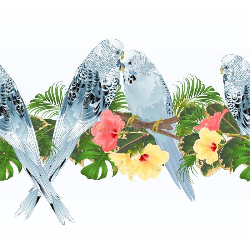 Undulat för parakiter för husdjur för tropisk bakgrund för gräns sömlös blå och illustration för hibiskustappningvektor för bruk  stock illustrationer