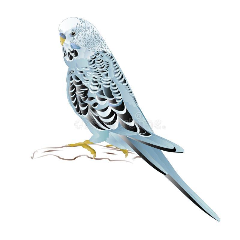 Undulat, hemhusdjur, älsklings- parakiter för blått eller budgie eller skalparakiter på en redigerbar vit illustration för bakgru vektor illustrationer