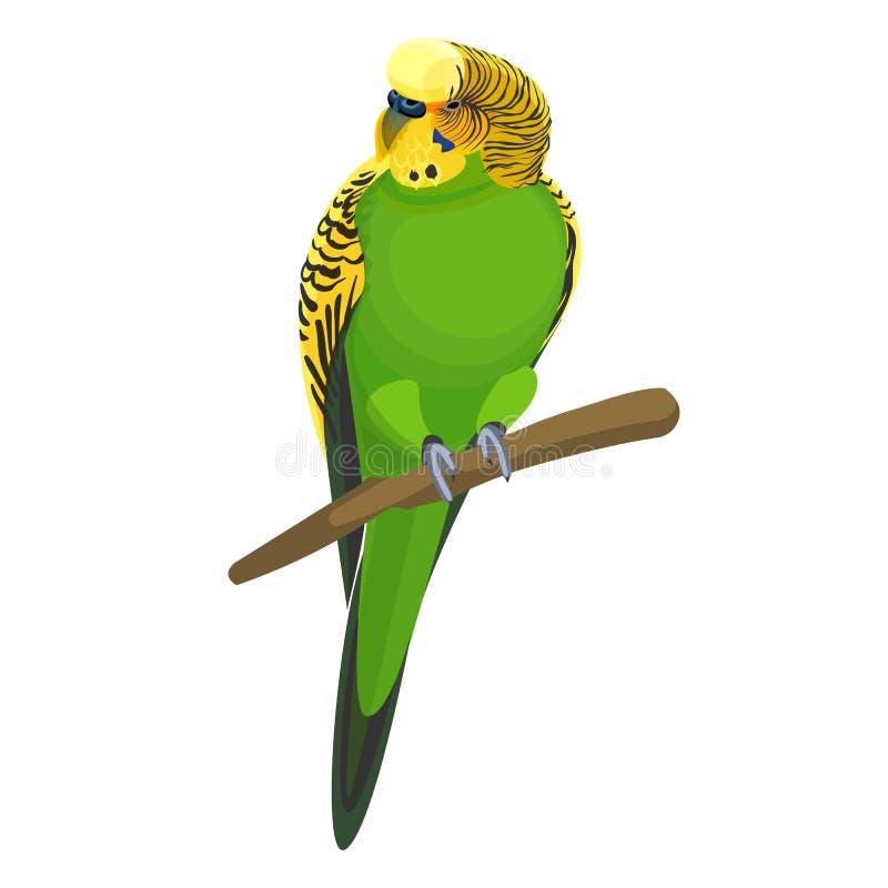 Undulatallmänningen eller skalparakiter ge någon ett smeknamn informellt budgievektorillustrationen vektor illustrationer