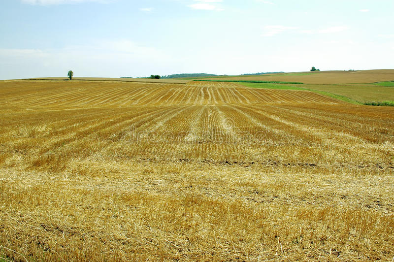 The undulating field .