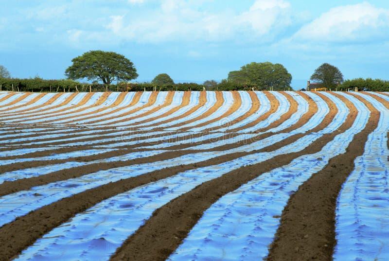 Download Undulating stripes stock photo. Image of horizontal, enhancement - 4010574