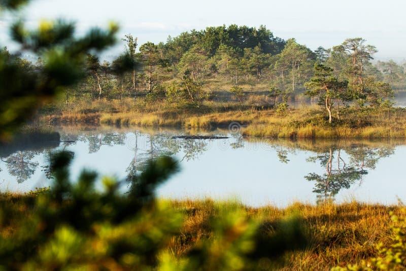 Une éminence dans un peatland humide en Estonie photos libres de droits