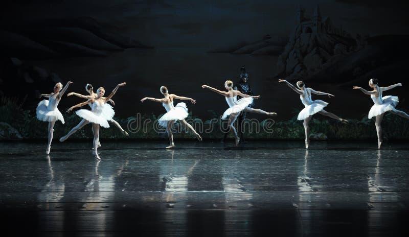 Une équipe de lac blanc swan de cygne-ballet images stock