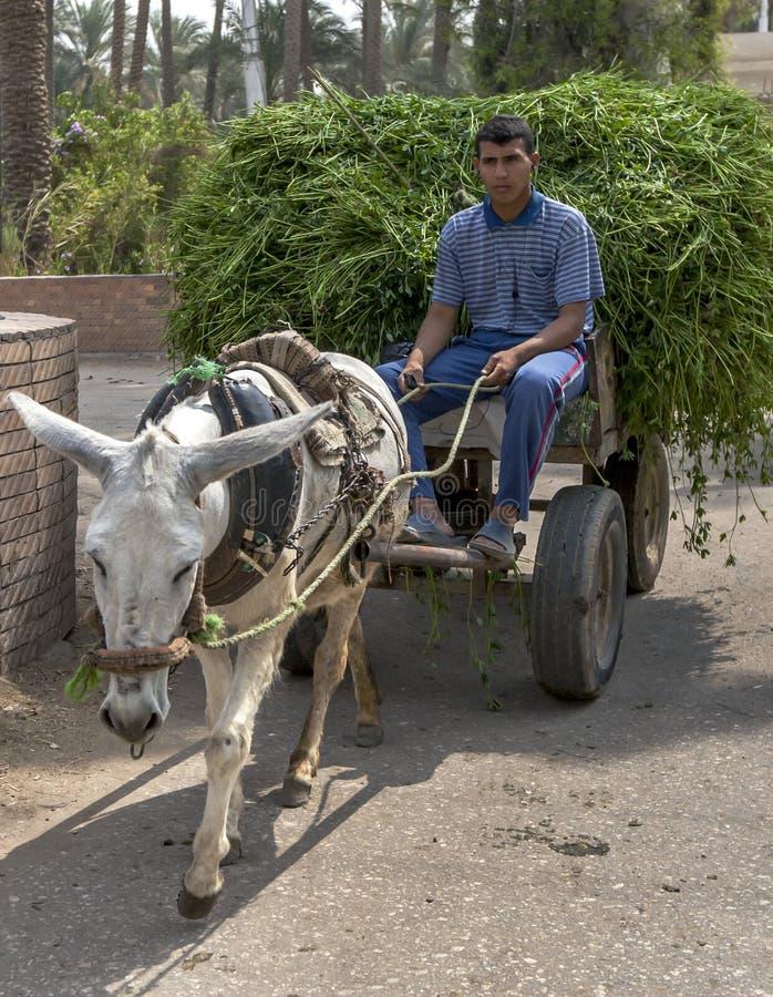 Une équitation égyptienne d'homme sur un chariot conduit par un âne à Saqqarah en Egypte photos libres de droits