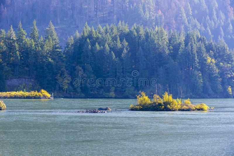 Une île avec des oiseaux et une île avec des arbres d'automne sur le Colu photographie stock
