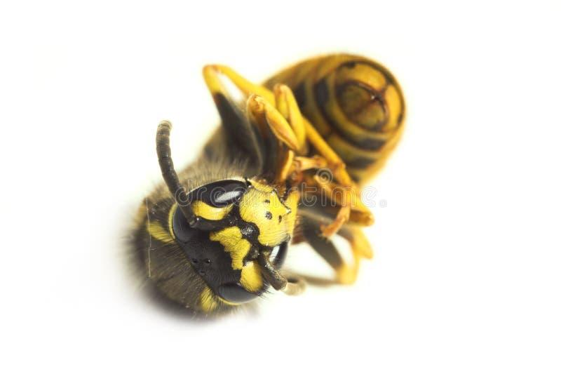 Une abeille image stock