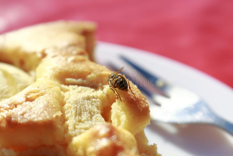 Une abeille, ou guêpe, se reposant sur un morceau de gâteau, appréciant la douceur photographie stock libre de droits