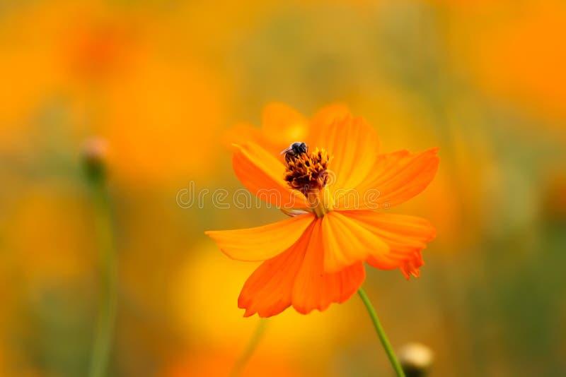 Une abeille parmi les fleurs image stock