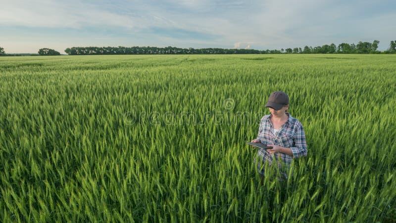 Une agricultrice avec une tablette dans les mains se tient dans un vaste champ de blé vert photographie stock