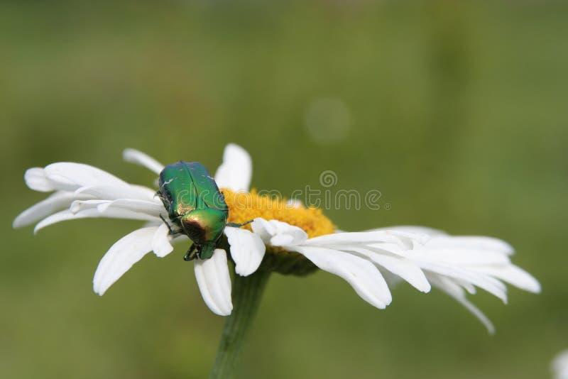 Une anomalie sur une fleur photo stock