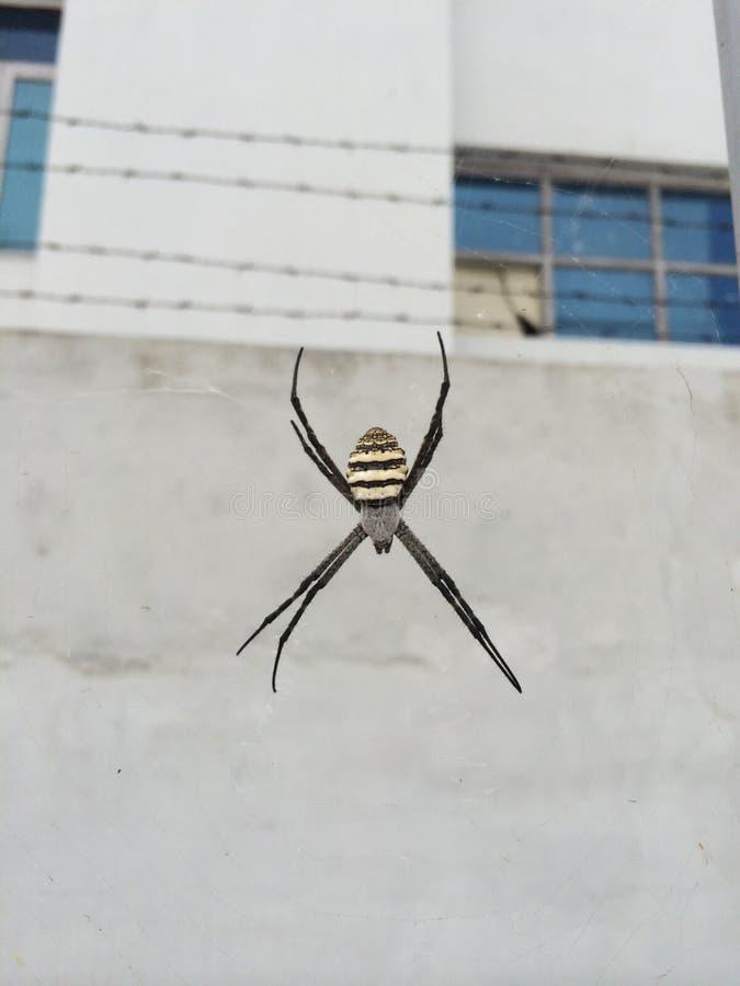 Une araignée était sur son Web presque mentant à ma maison image libre de droits