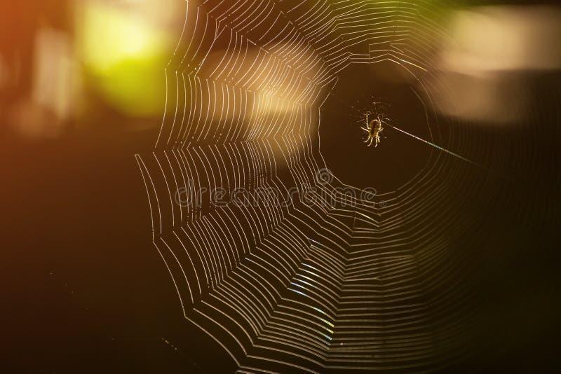Une araignée en Web image stock