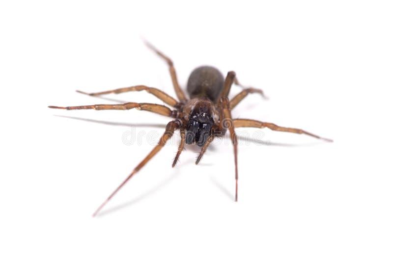 Promenade d'araignée image stock