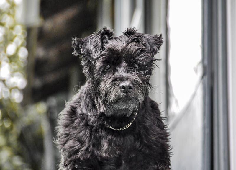 Une attente de chien photo libre de droits