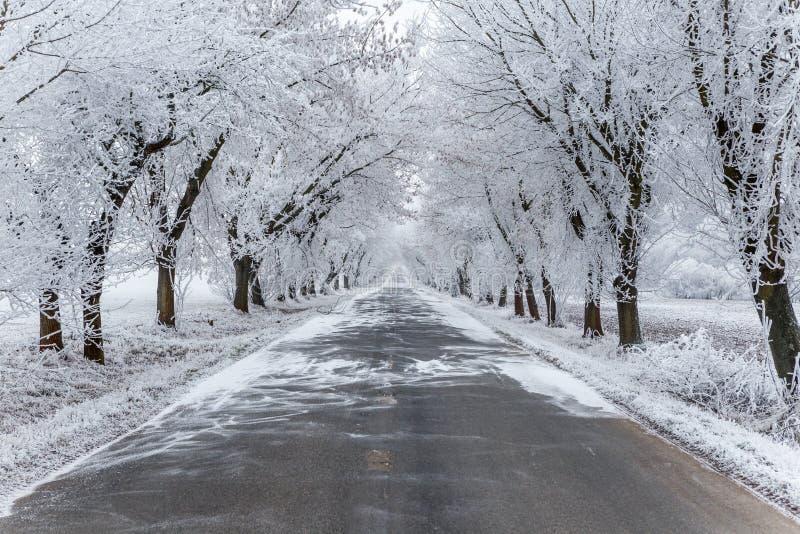Une avenue avec de la glace a couvert des arbres images libres de droits
