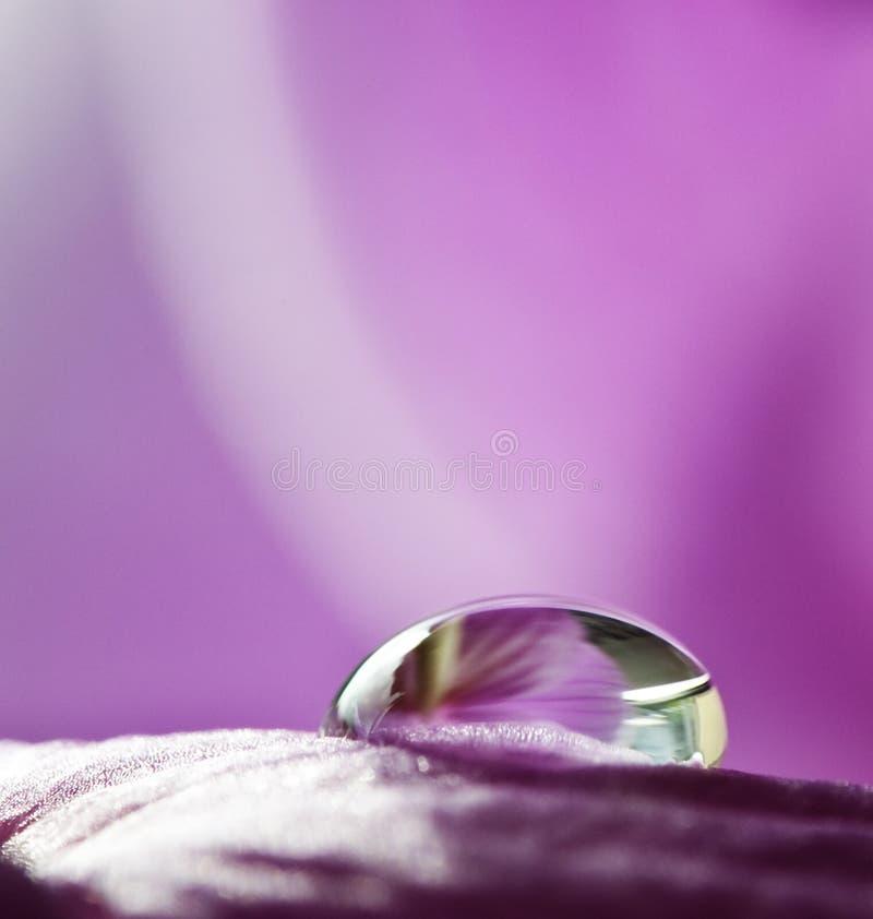 Une baisse de pluie sur le pétale de fleur images stock