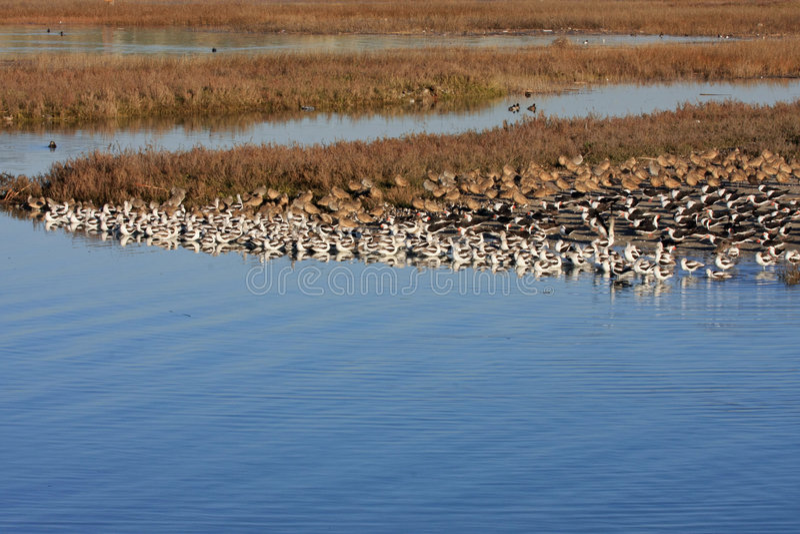Une bande d'oiseaux à l'eau image stock