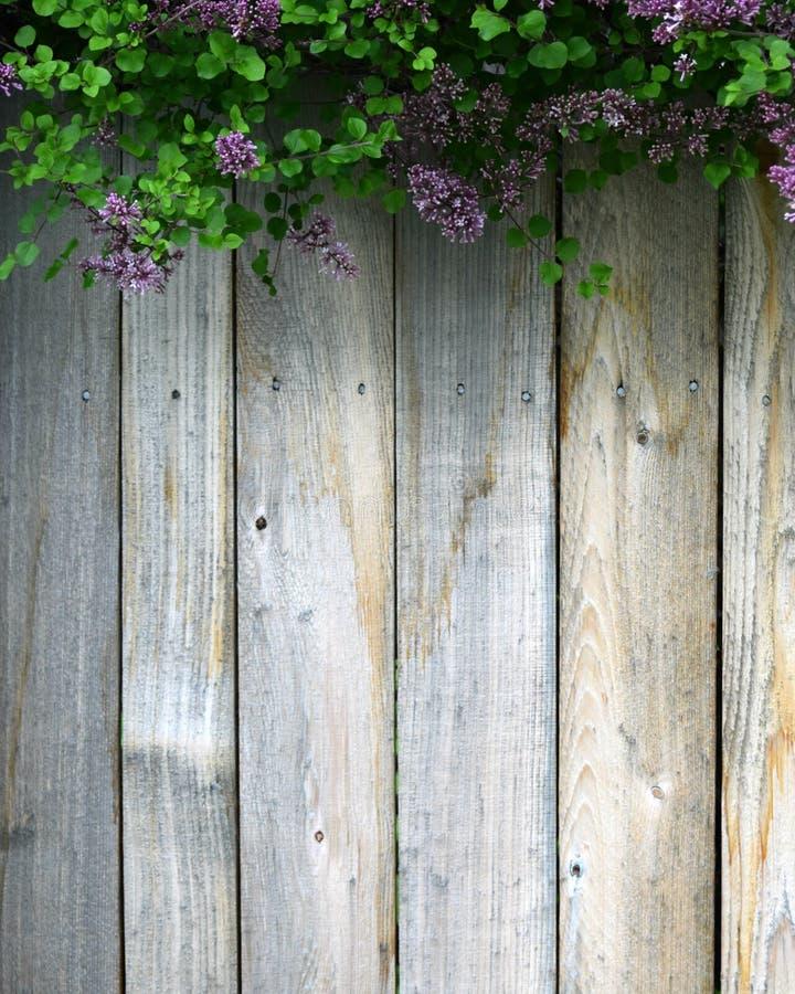 Une barrière en bois et des lilas pourpres photos libres de droits