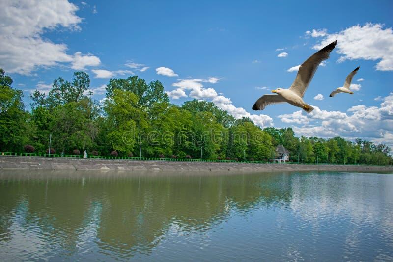 Une belle décoration d'été avec beaucoup d'arbres verts parc sur le rivage d'un lac, d'une forêt verte merveilleuse et d'une viei photographie stock