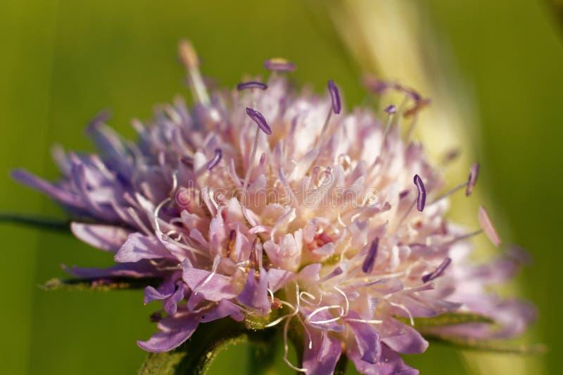 Une belle et jolie macro fleur photo libre de droits
