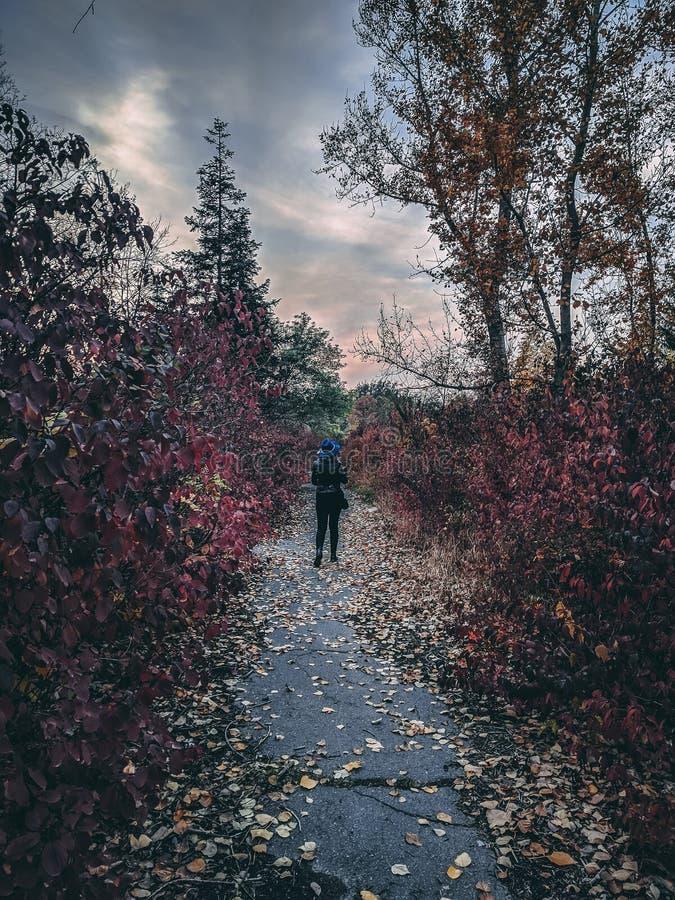 Une belle femme marche en parc par temps nuageux pendant l'automne images stock
