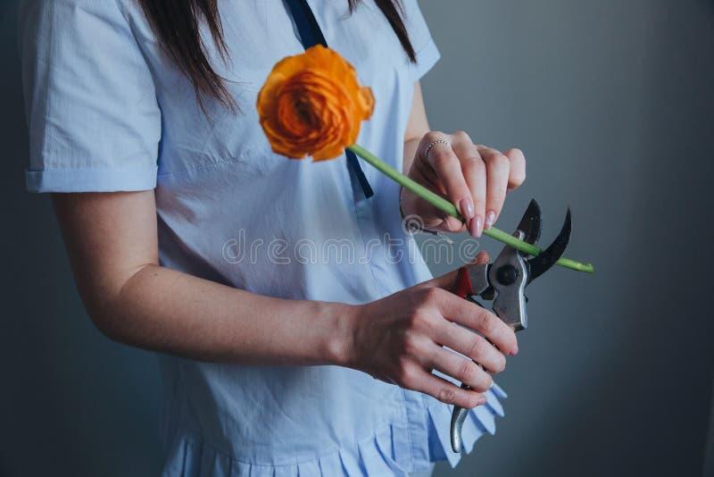 Une belle fille coupant la fleur orange de tht Préparation du bouquet photographie stock libre de droits