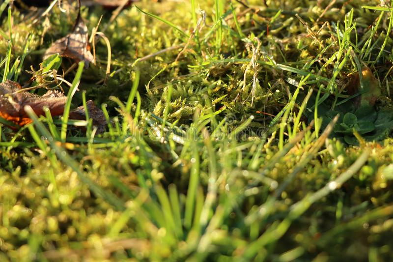 Une belle herbe sauvage après avoir plu le jour avec le soleil photographie stock