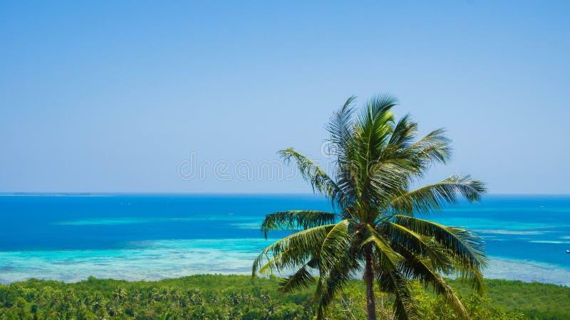 Une belle noix de coco de palmier avec le paysage vert de mer de vue aérienne de forêt avec la mer de l'eau bleue dans le jour en photos stock