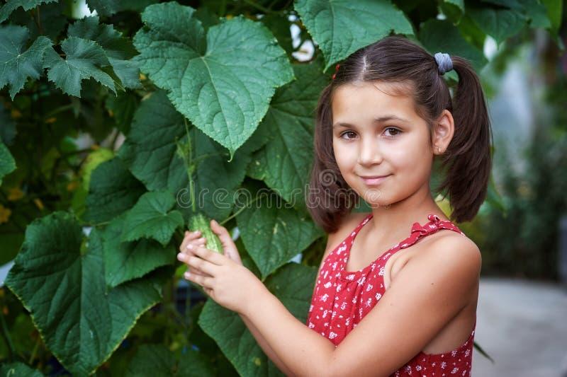 Une belle petite fille dans les récoltes de secteur suburbain photos libres de droits
