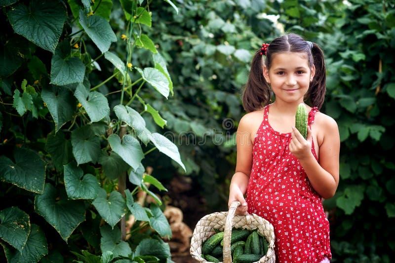 Une belle petite fille dans les récoltes de secteur suburbain photographie stock