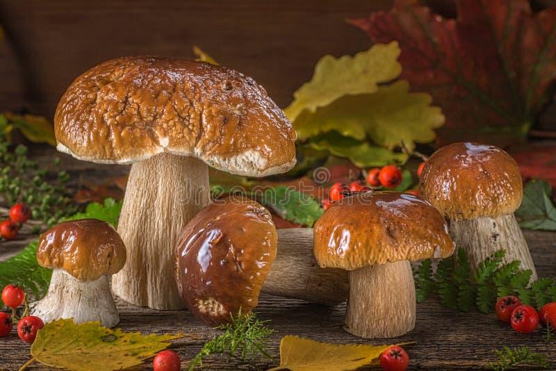Une belle toujours vie de grands champignons blancs naturels images stock