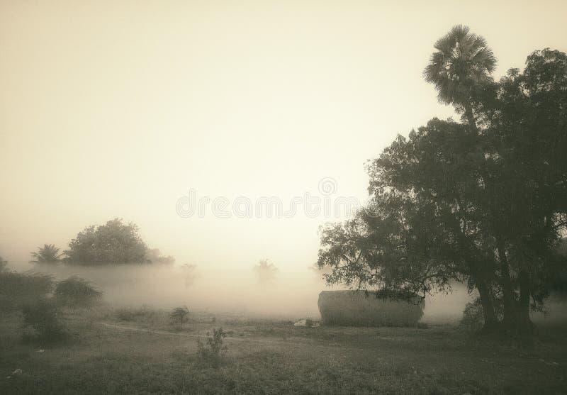 Une belle vue de matin brumeux d'hiver dans les domaines photographie stock libre de droits