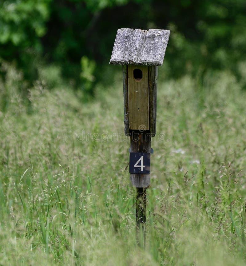 Une boîte ordonnée d'oiseau bleu images libres de droits