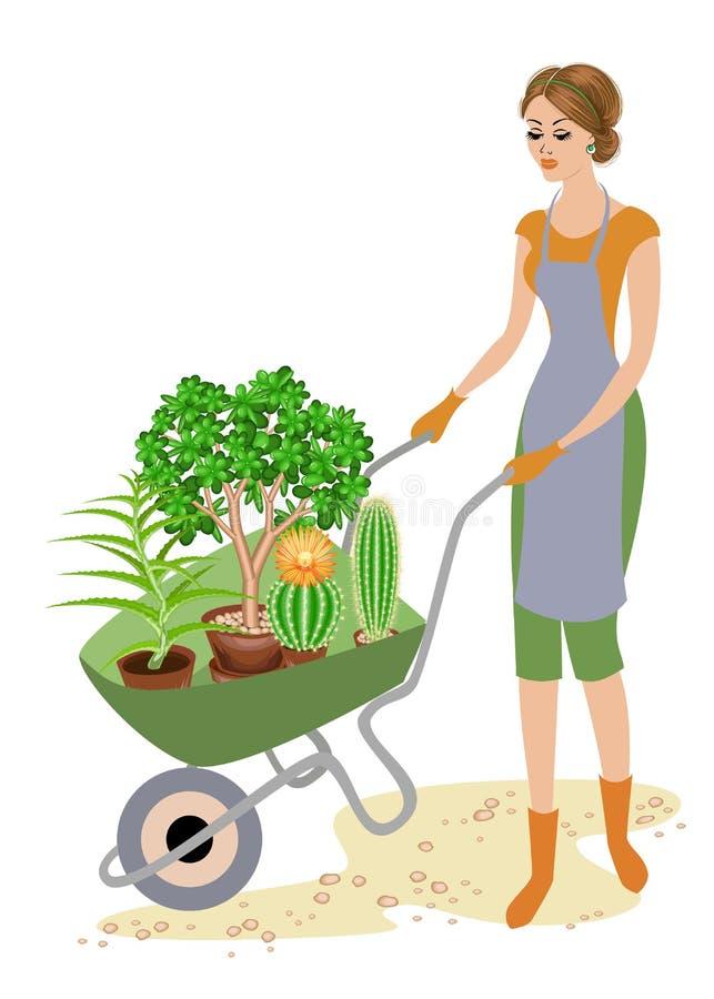 Une bonne dame dans des vêtements de travail La fille utilise une brouette de jardin avec des pots, cactus, aloès, crassula Une f illustration libre de droits