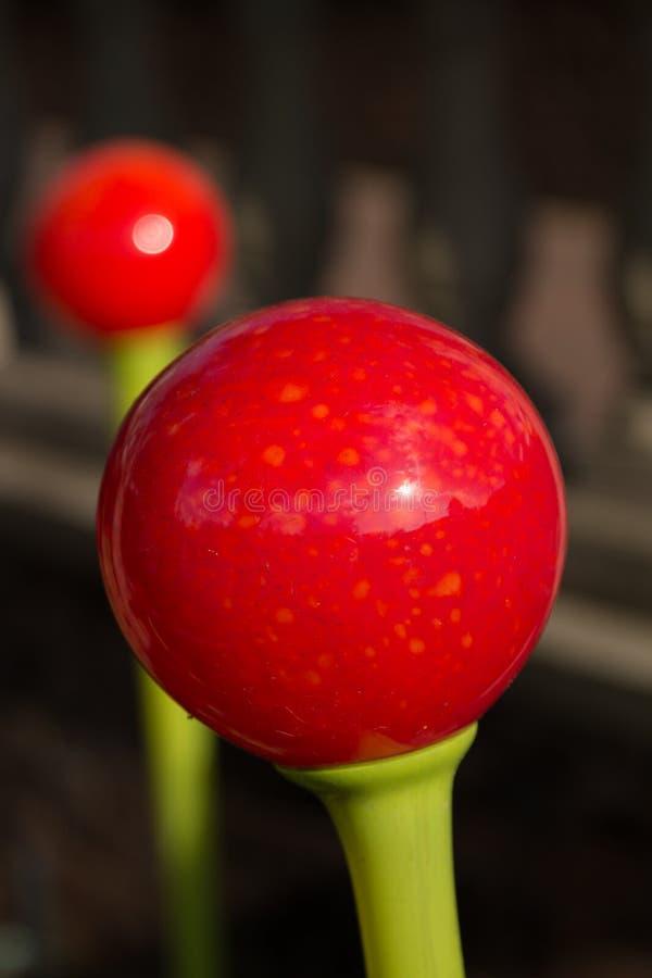 Une boule rouge lumineuse sur une tige verte photos libres de droits