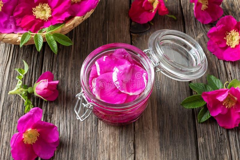 Une bouteille d'huile essentielle avec des roses de Rugosa images libres de droits