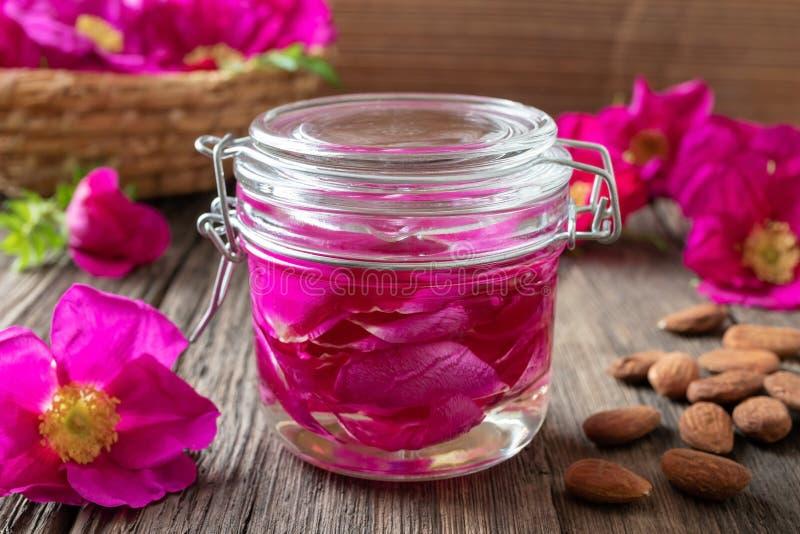 Une bouteille d'huile essentielle avec des roses de Rugosa photos stock
