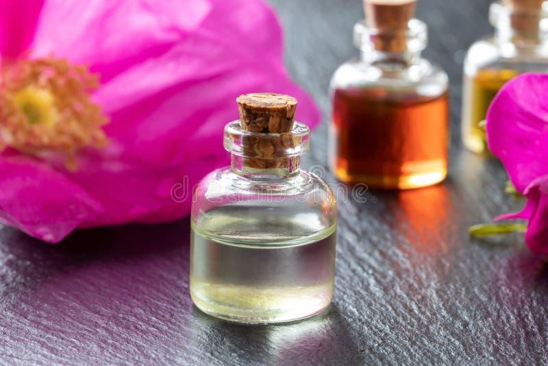 Une bouteille d'huile essentielle avec Rugosa s'est levée des fleurs images libres de droits