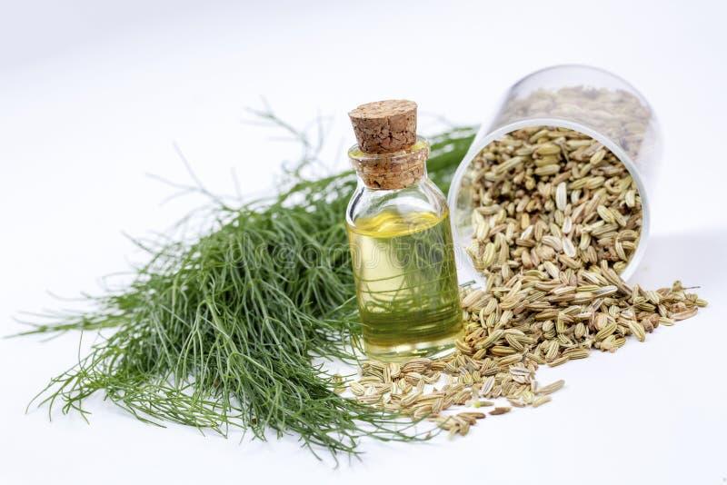 Une bouteille d'huile essentielle de fenouil avec les brindilles de fenouil et les graines de fenouil vertes fraîches à l'arrière illustration stock