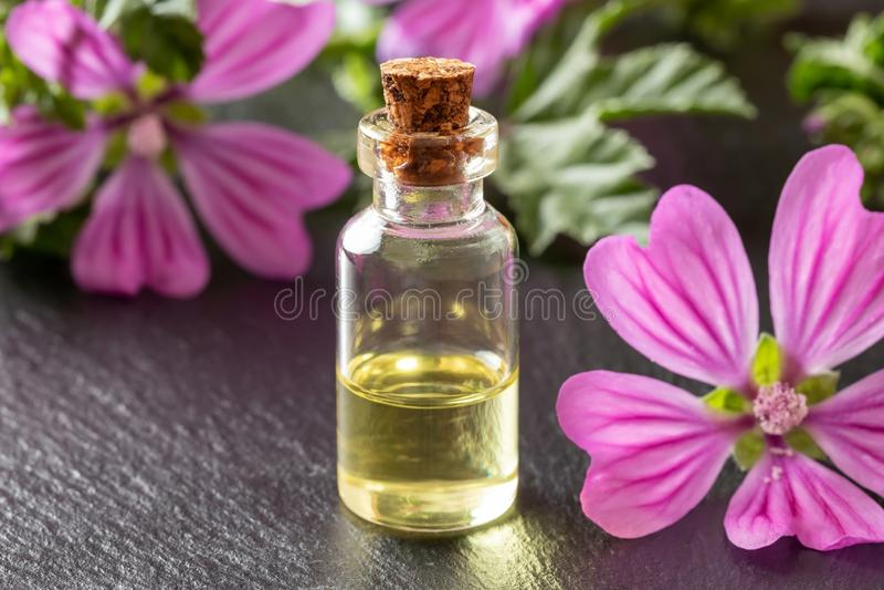 Une bouteille d'huile essentielle de mauve avec les fleurs fra?ches de sylvestris de malva images stock