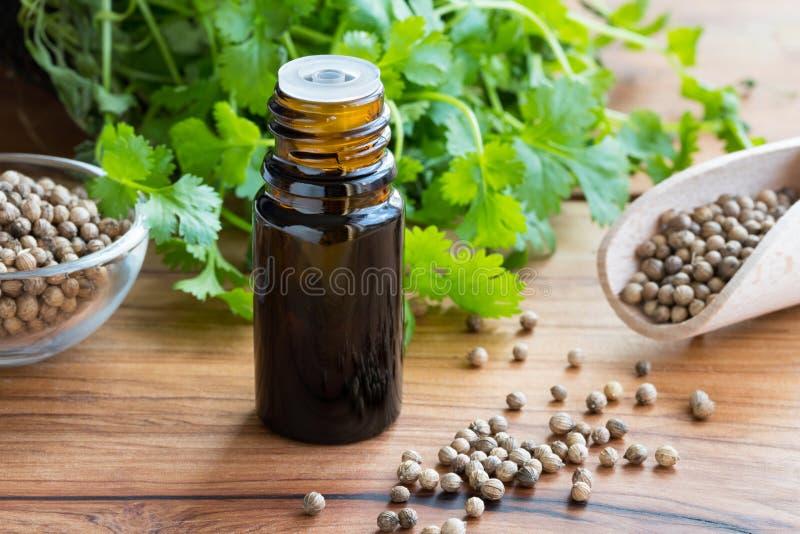 Une bouteille foncée d'huile essentielle de coriandre avec des graines de coriandre image stock