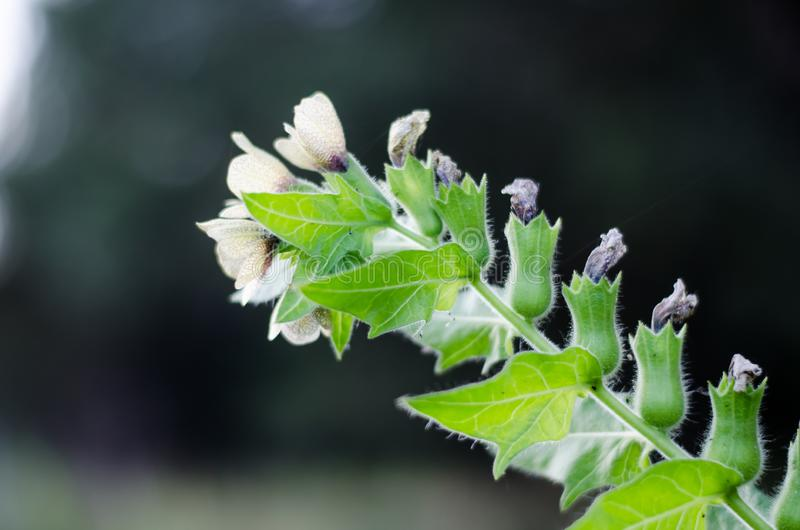Une branche d'une fleur de pré Cloches accrochantes Enlevez diagonalement dans la distance image stock