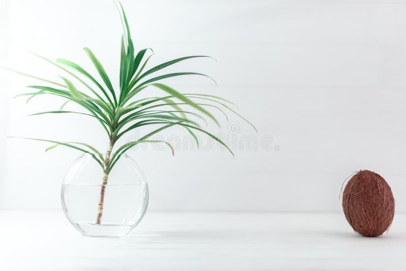 Une branche d'un palmier dans un vase en verre avec la noix de coco images libres de droits